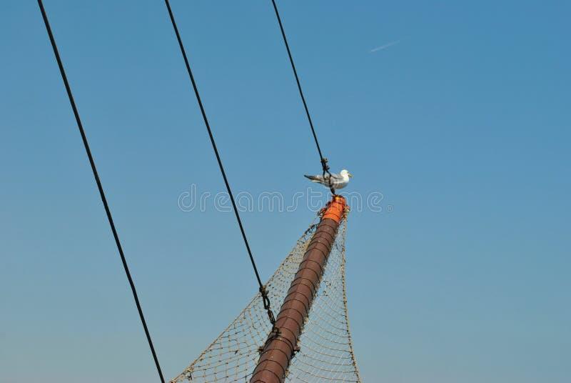 Ptak na statku fotografia royalty free