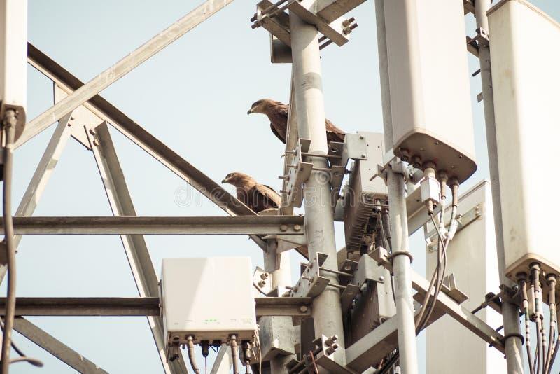 Ptak na wysokonapięciowej przekaz linii Ptaki no dostają szokującymi gdy siedzą na elektrycznych drutach jak oba ptaków cieki a fotografia royalty free