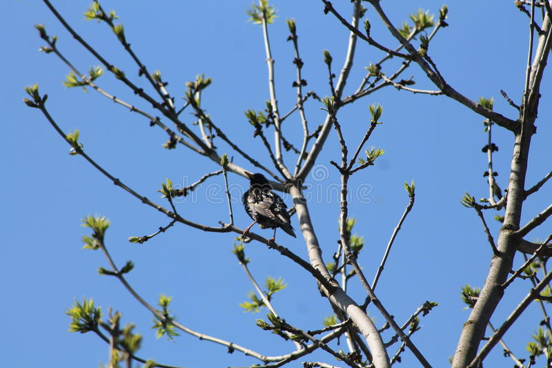 Ptak od Ukraina obrazy stock