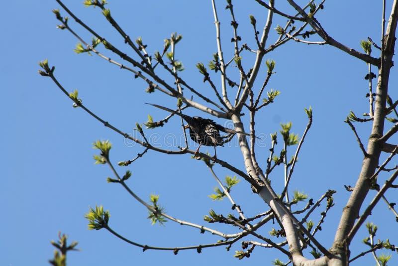 Ptak od Ukraina fotografia stock