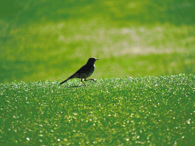 Ptak out dla spaceru zdjęcia royalty free