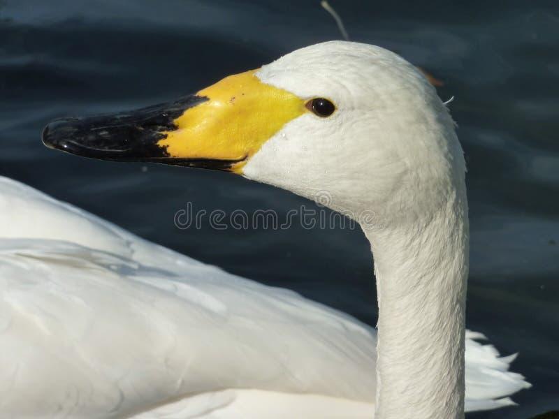 ptak pełen wdzięku zdjęcia royalty free