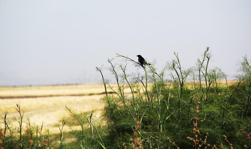 Ptak Przegapia Solankowych bagna obraz stock