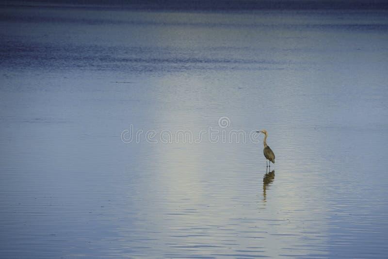 Ptak przy Ding natury Kochaną prezerwą obraz royalty free