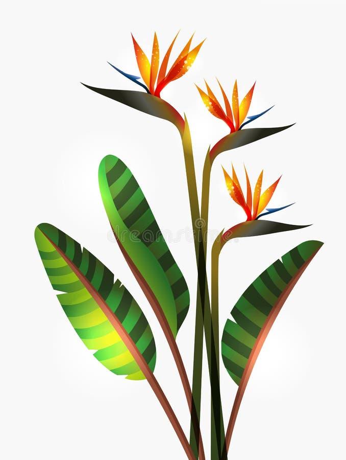 Ptak raju trzon i kwiat ilustracji