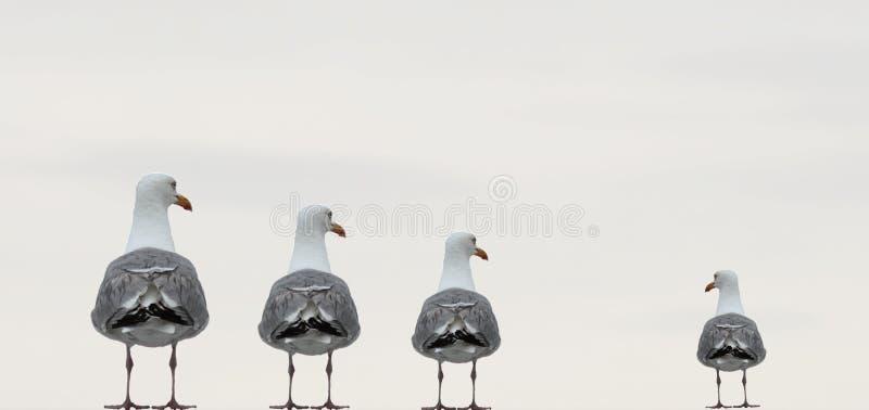 Ptak, Seabird, belfer, Wodny ptak