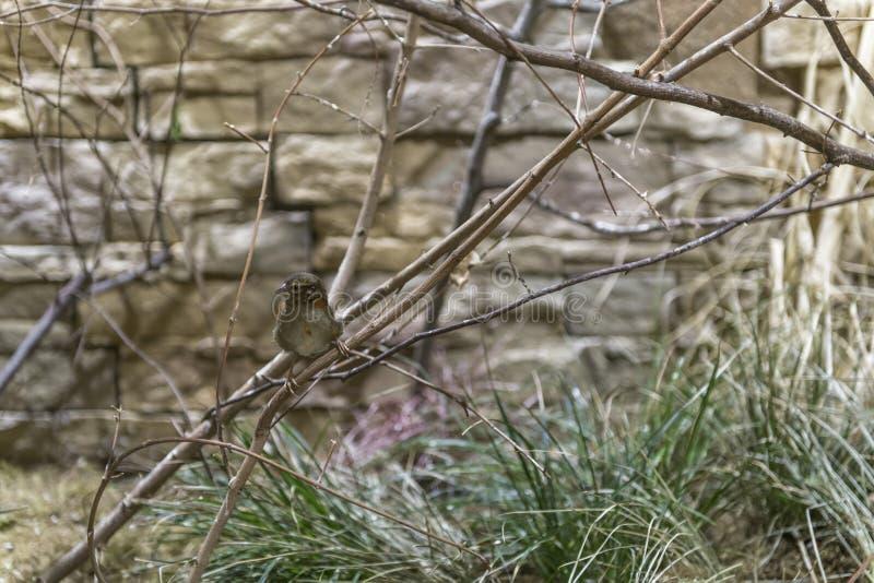Ptak siedzi na gałąź obrazy stock