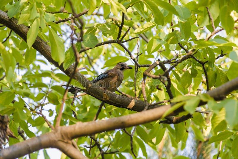 Ptak siedzi na zielonym drzewie na słonecznym dniu zdjęcia royalty free