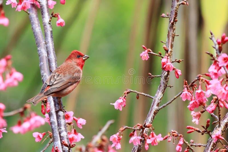 Ptak ssa nektar od kwiatów fotografia stock