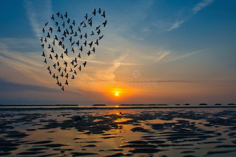 Ptak sylwetki lata nad morze przeciw wschodowi słońca w fo obraz royalty free