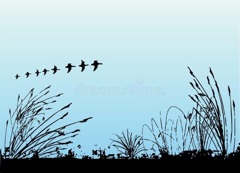 ptak trawy wektora ilustracji