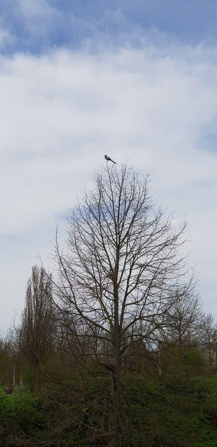 ptak tylko w drzewie zdjęcie stock