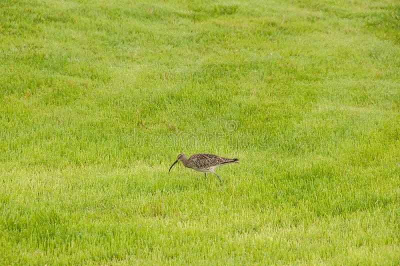 Ptak w ich naturalnym siedlisku zdjęcie stock