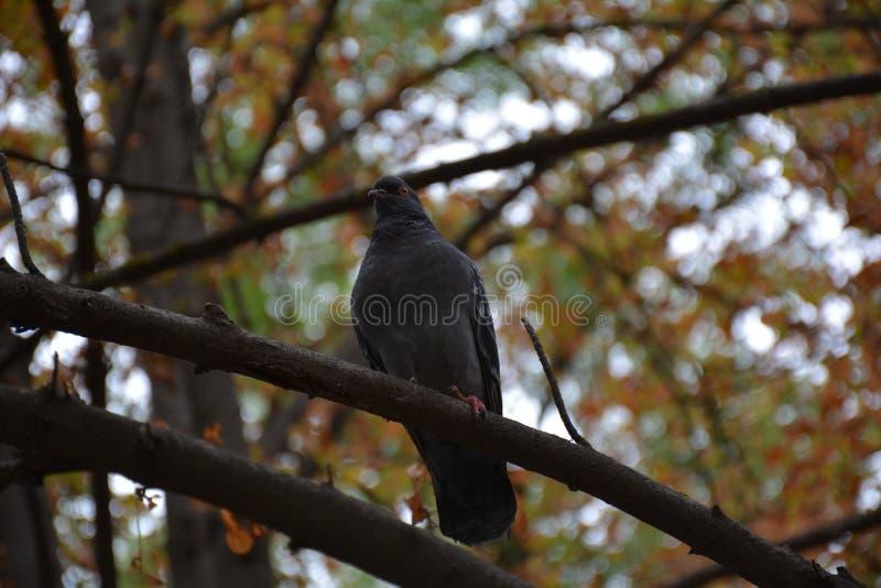 Ptak w jesień parku na drzewie obrazy stock