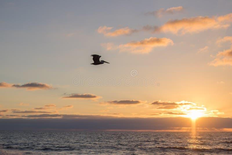 Ptak w locie obraz royalty free