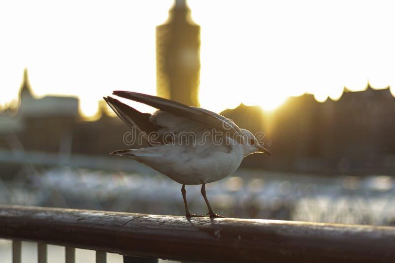 Ptak w mie?cie zdjęcia royalty free