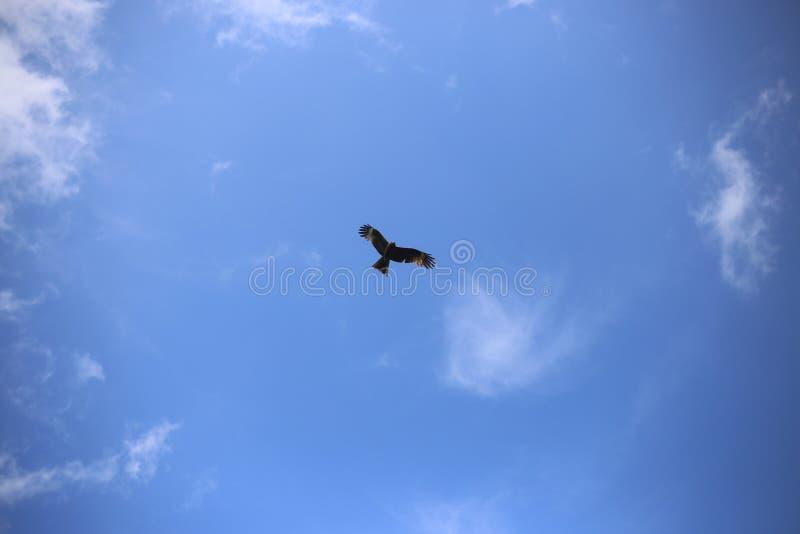 Ptak w niebie zdjęcia stock