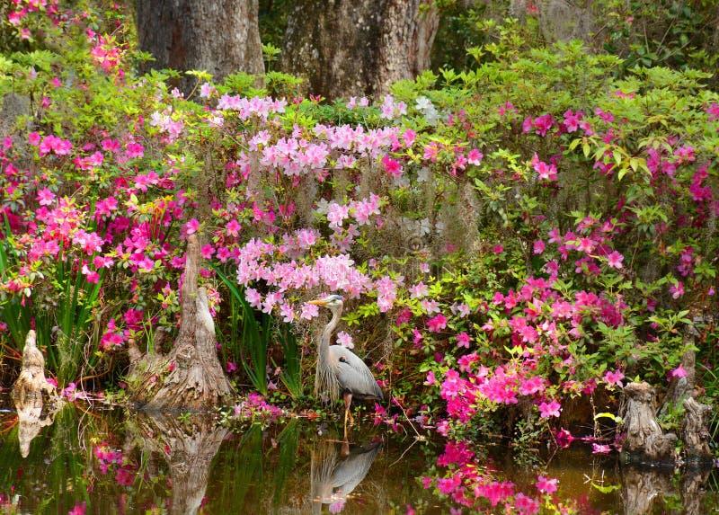 Ptak w pięknym kwitnienie ogródzie zdjęcia royalty free