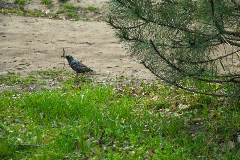 Ptak w wiosny kwitnienia ciepłym parku obraz royalty free