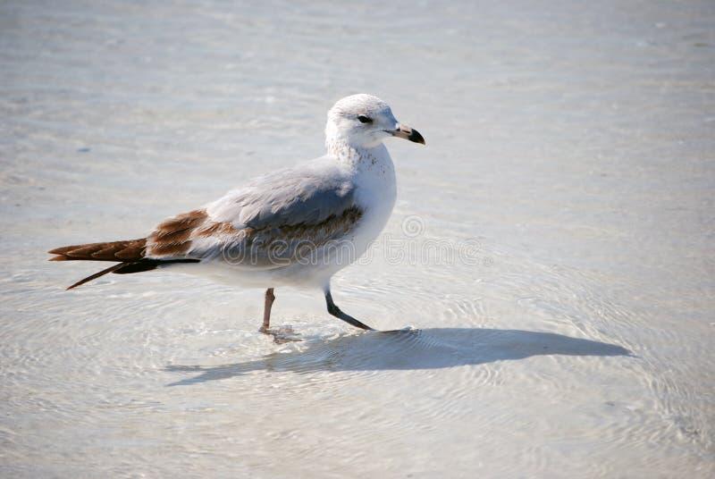 Ptak w wodzie zdjęcie royalty free