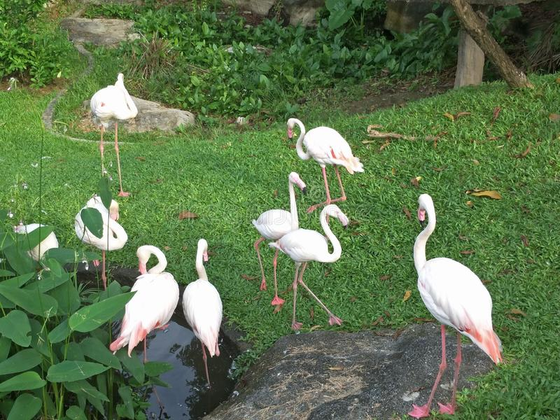 Ptak w zoo obrazy royalty free