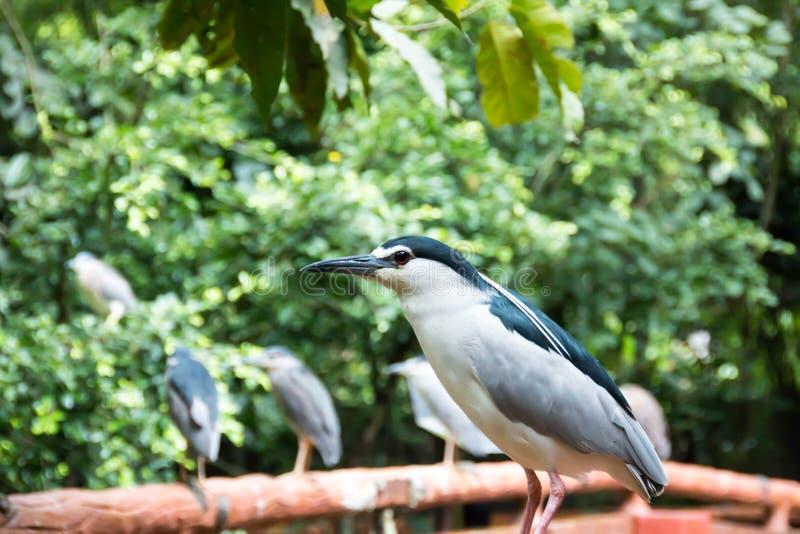 Ptak w zoo zdjęcie royalty free