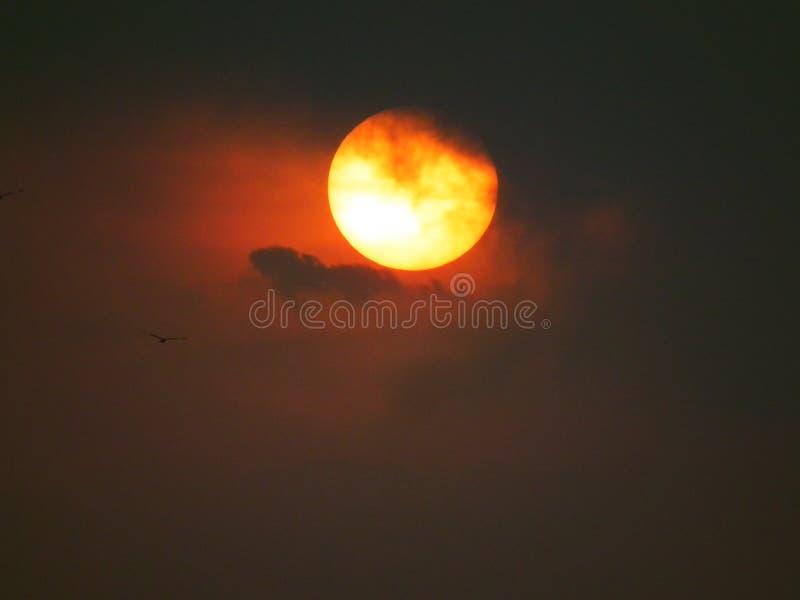 Ptak z słońcem w ranku zdjęcie royalty free