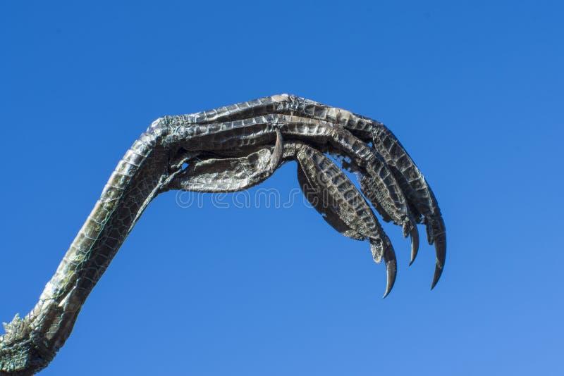 Ptak zdobycza pazur na niebieskiego nieba tle obrazy stock