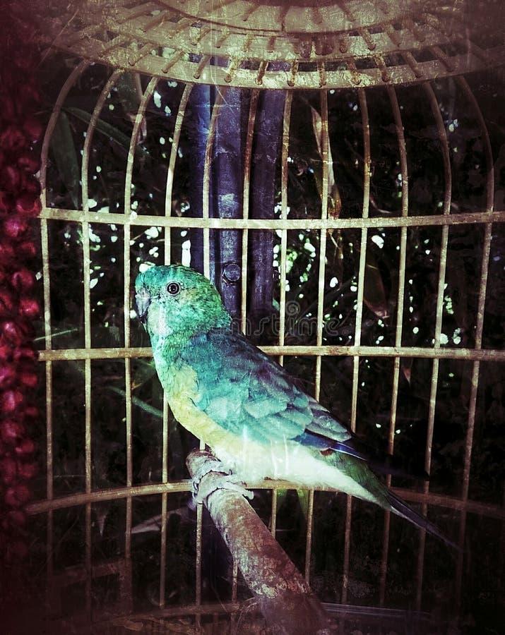 Ptak zieleń fotografia stock