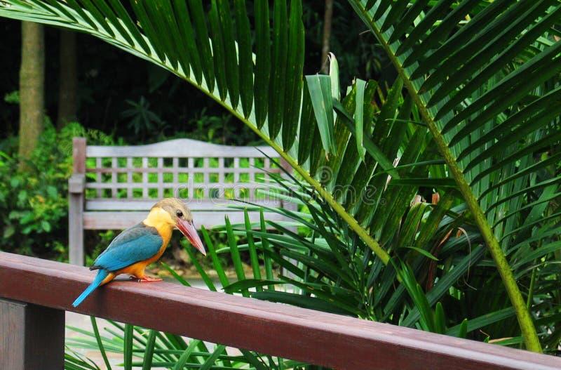 ptak zimorodka park zdjęcie royalty free