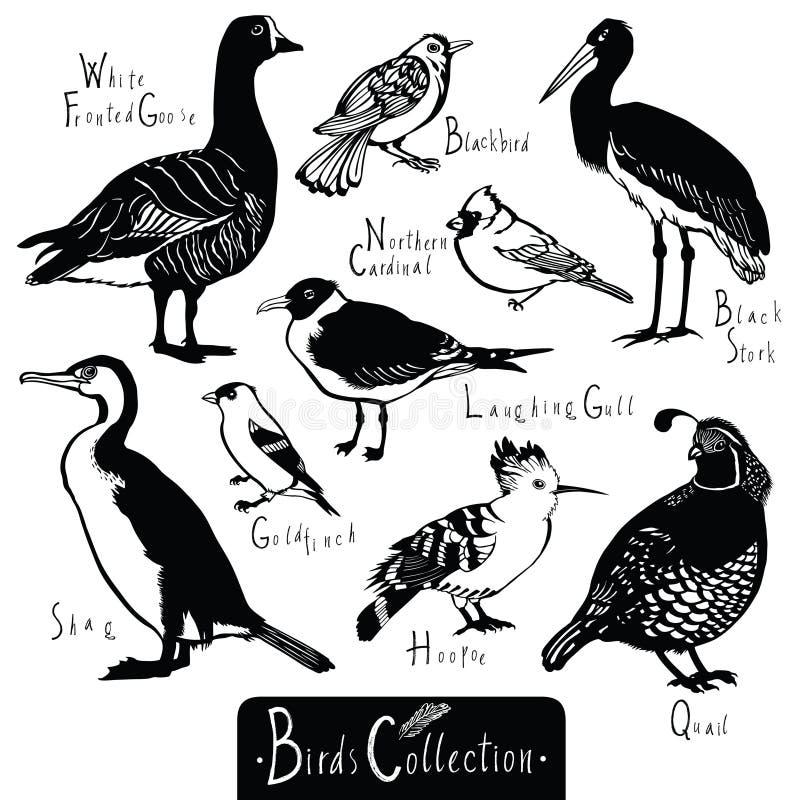 Ptaka Czarnego bociana szczygła Roześmianego frajera przepiórki inkasowy dudek ilustracja wektor
