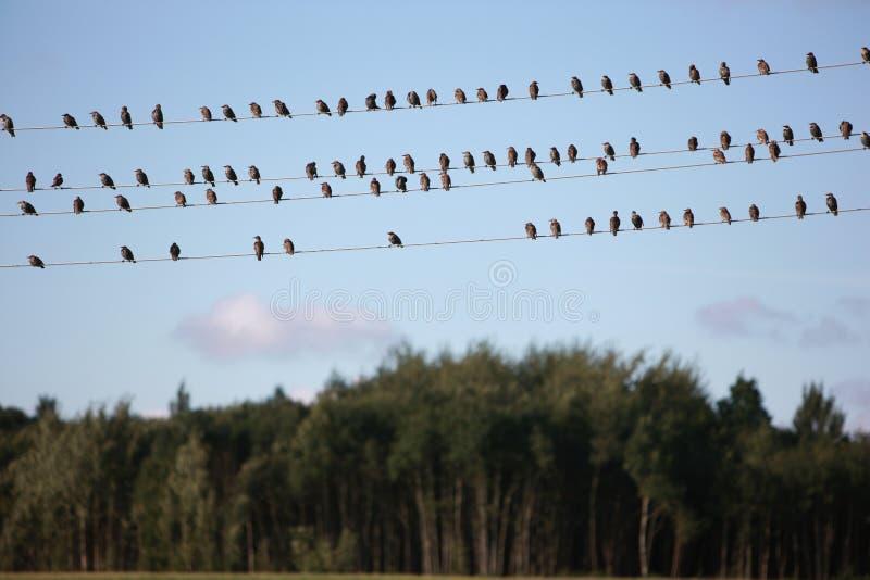 ptaka drut fotografia stock