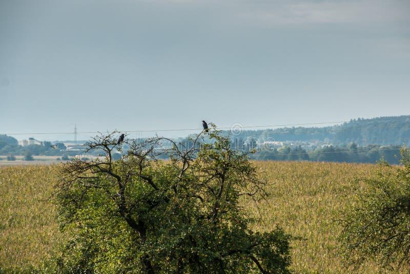 ptaka drzewo dwa zdjęcia royalty free