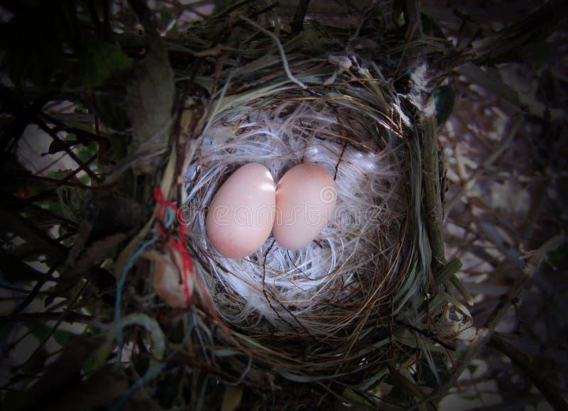 Ptaka Gniazdeczko zdjęcie stock