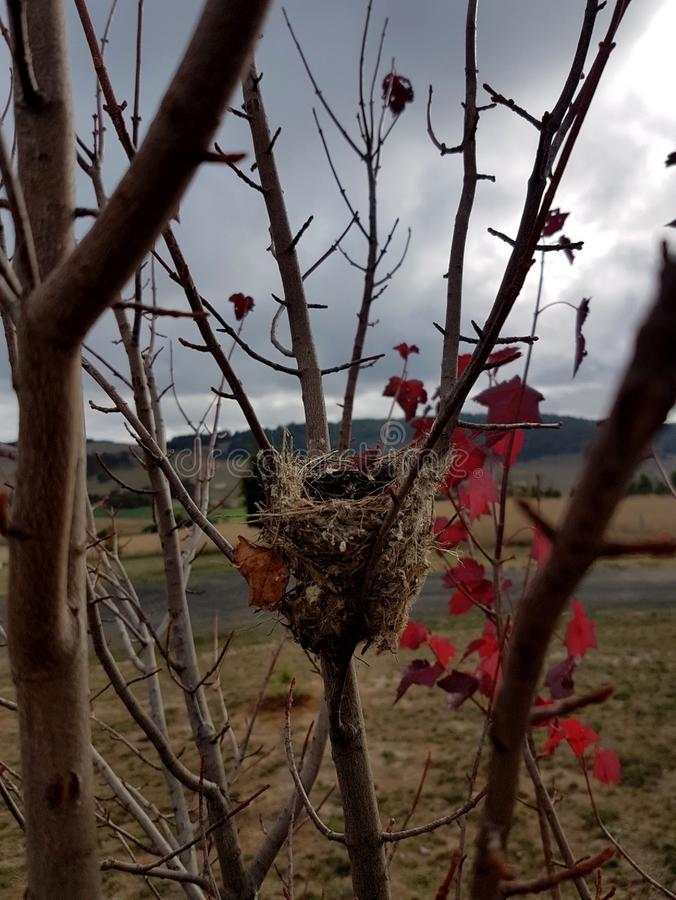 Ptaka gniazdeczko w gałąź obrazy royalty free