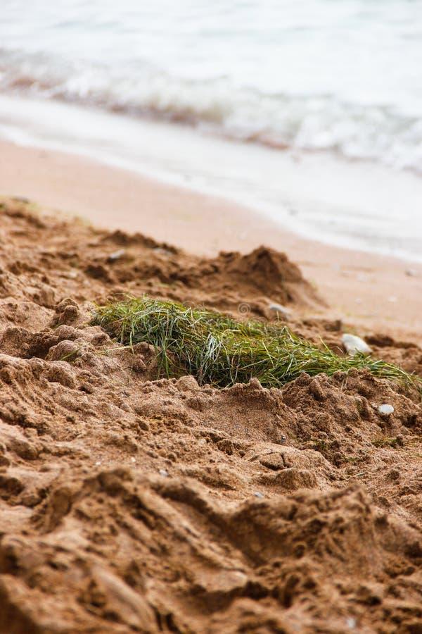 Ptaka gniazdeczko w piasku morzem fotografia royalty free