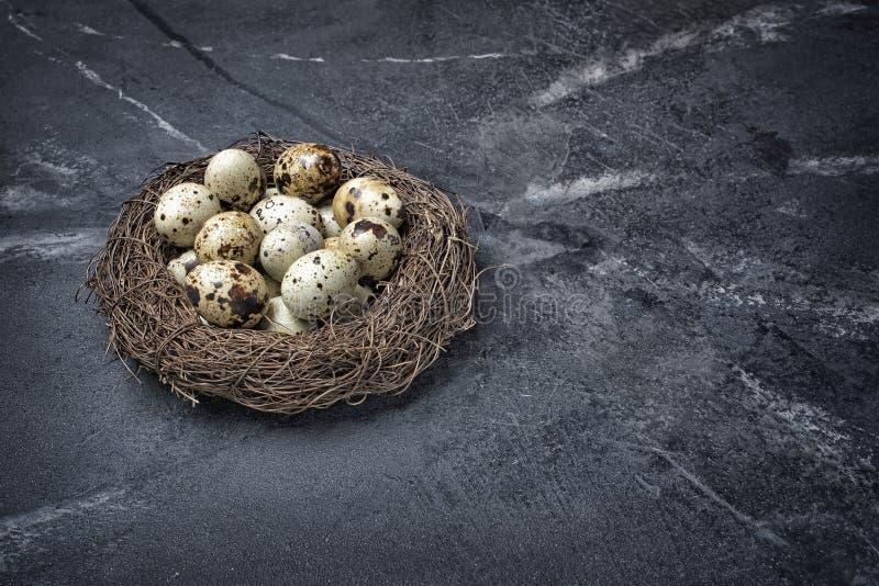 Ptaka gniazdeczko z małymi przepiórek jajkami obrazy royalty free