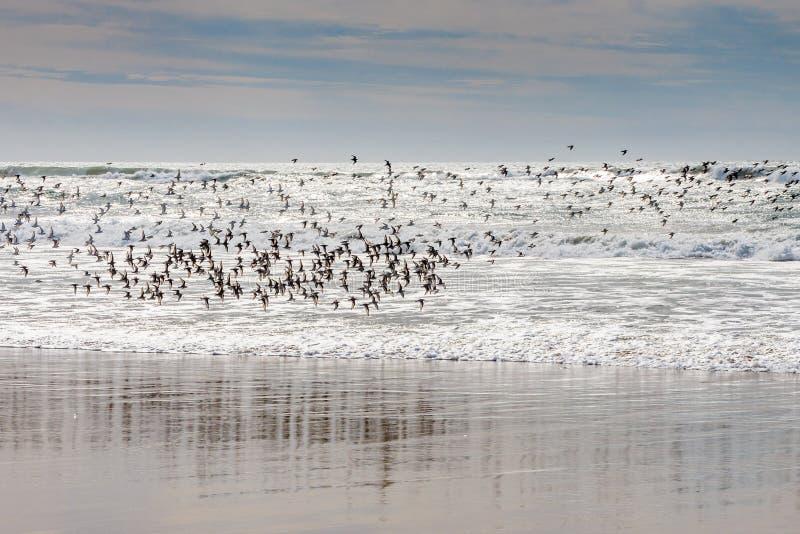 ptaka lot nad morzem obrazy royalty free