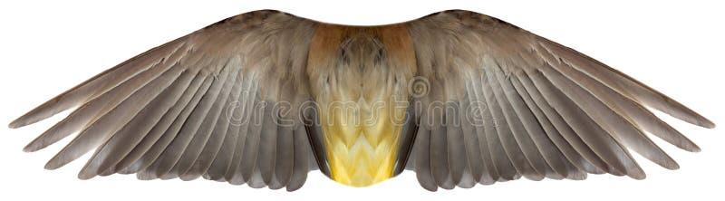 Ptaka lub anioła piórka skrzydła Odizolowywający zdjęcie stock