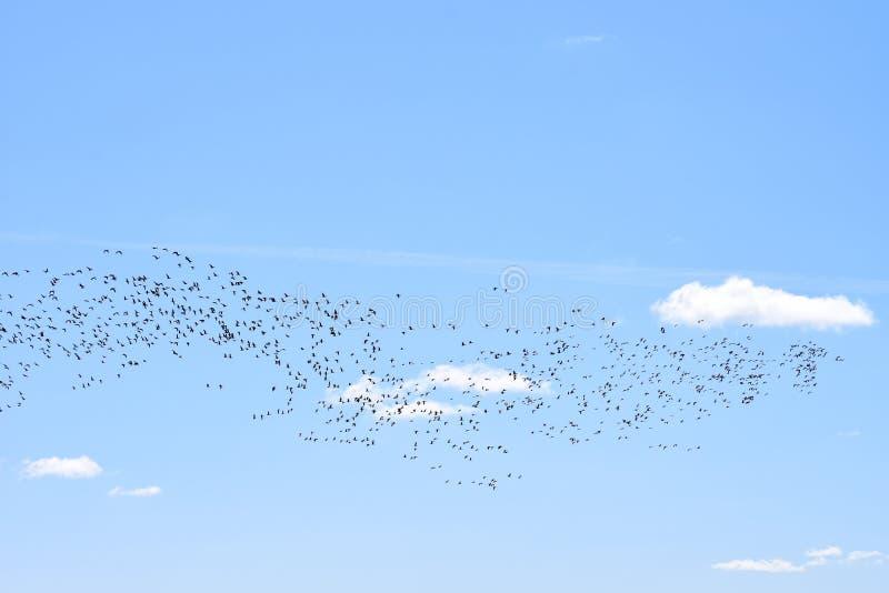 Ptaka migrującego powrotu dom w wiośnie ich siedliska obraz royalty free