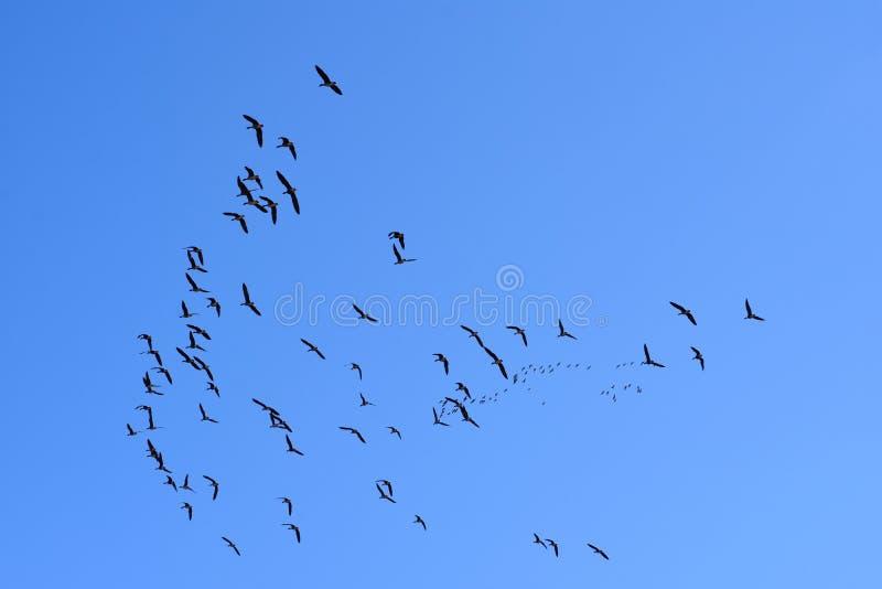 Ptaka migrującego powrotu dom w wiośnie ich siedliska zdjęcia royalty free