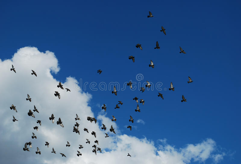 ptaka niebo obraz royalty free