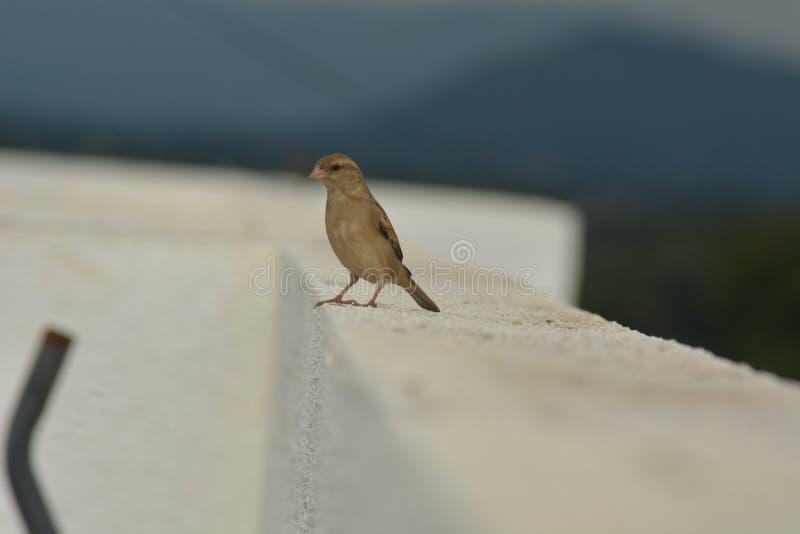 Ptaka odpoczywać obrazy stock