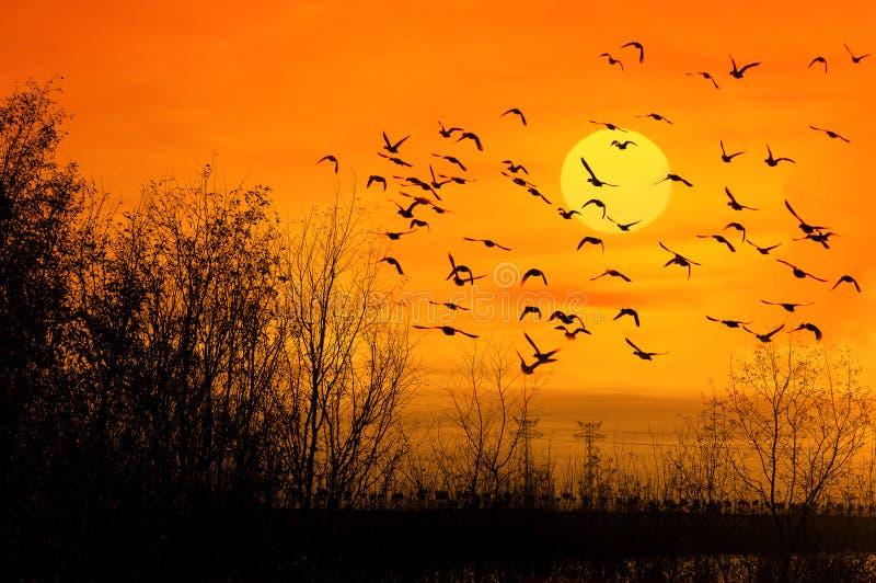 ptaka słońce zdjęcia royalty free