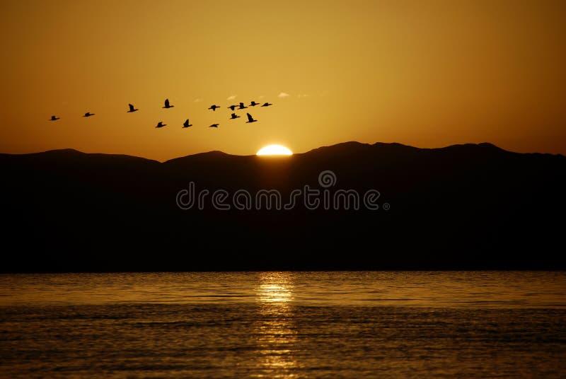 ptaka słońce zdjęcia stock