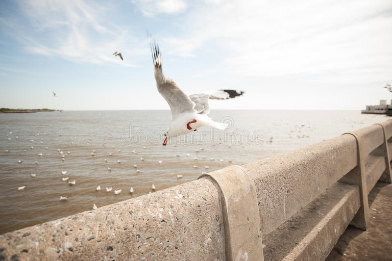 Ptaka sezon obrazy stock