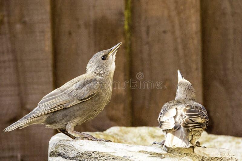 Ptaka sk?panie obraz royalty free