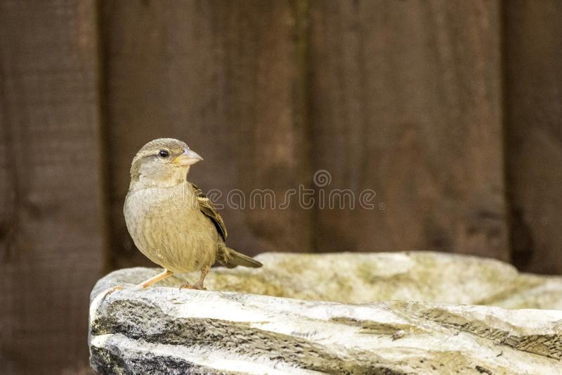 Ptaka sk?panie zdjęcie royalty free