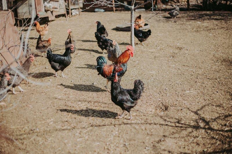 Ptaka spacer w świeżym powietrzu Piękni, kolorowi ptaki, karmią na ulicie fotografia royalty free