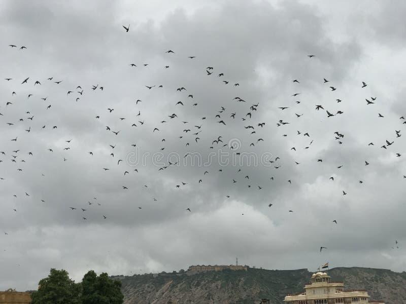 ptaki obrazy royalty free